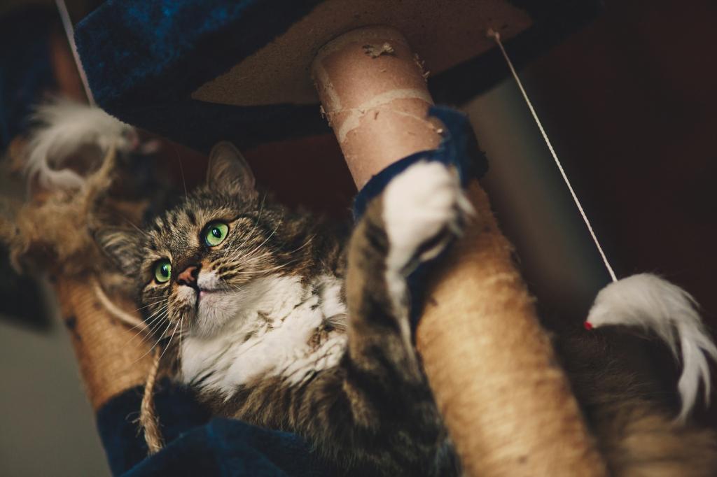 Il gatto Bufo sul trespolo